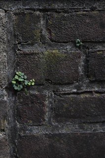 A tiny plant on the wall