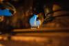 Franca-Paris-0033.jpg (Patricia Figueira) Tags: ponto turistico paris torre eiffel franca eiffeltower pontoturistico torreeiffel france létanglaville îledefrance frança fr