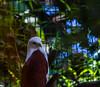 20170820-0I7A0474-Brahminy Kite (siddharthx) Tags: singapore sg brahminykite birdsofprey canon7dmkii nature ef100400mmf4556lisiiusm jurongbirdpark aviary bigbirds largebirds