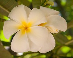 Hawaii 17 High Res (73 of 112).jpg (lowman74) Tags: hawaii2017 flower