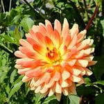 Flor a Lac Annecy. thumbnail