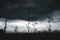 Light in the middle (explored) (Ivan Vranić hvranic) Tags: lowlight nature field plants clouds dark grey lowangle shalowdof