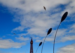 Dune Grass, The Tower and the Birds (rustyruth1959) Tags: nikon nikond3200 tamron16300mm uk england lancashire blackpool thegoldenmile dunegrassscultures dunegrass sculptures promenade outdoor three tower blackpooltower structure flag unionflag flagpole tall bend sway breeze gulls seagulls birds sky clouds bluesky resort holidayresort arena towerfestivalheadland kineticsculptures kinetic architecture design silhouette black gradeilistedbuilding listedbuilding metal