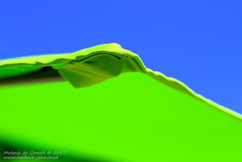 Green Umbrella 4