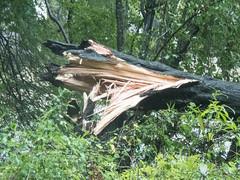 UW110132.jpg (jramspott) Tags: georgia storm river nature water chattahoochee atlanta rain tropicalstorm irma unitedstates us