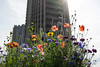 Barbican flowers (Spannarama) Tags: flowers wildflowers poppies backlit cornflowers sunlight sunshine flare tower towerblock concrete brutalist architecture highwalk barbican london uk