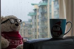 Rainy day (p.nikoloup) Tags: edinburgh scotland rain bear coffee cup afternoon cozy relax nikon d3200
