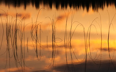 'Nature's Ideogram' (Canadapt) Tags: sunset grass lake water reflection reeds clouds treeline keefer canadapt