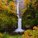 Multonomah Falls Autumn