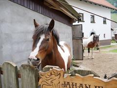 Horses in a stable in Kranjska Gora