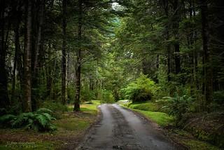 Camino del parque - Parque Nacional Pumalin (Patagonia Chile)