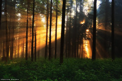 Lights of the forest (Hector Prada) Tags: bosque amanecer luz niebla bruma dorado mágico momento sol árbol verano mañana forest sunrise sunlight golden moment magic enchanted mist mystic nature naturaleza sunbeams tree dream paísvasco