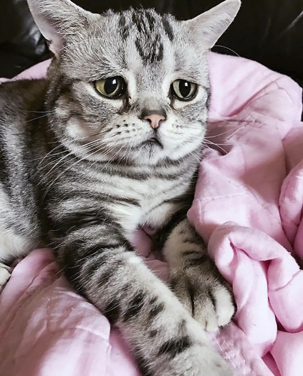 Nhìn bộ mặt buồn thiu như mất sổ gạo của boss mèo đáng yêu, con sen nào cũng muốn ôm lấy một cái - Ảnh 3.