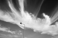 Lisbon, Portugal  September 2017 (Gerald Verdon) Tags: instagramapp squareformat uploaded:by=instagram clouds lisbon fujifilm xt20 18mm bird post bw blackandwhite noiretblanc