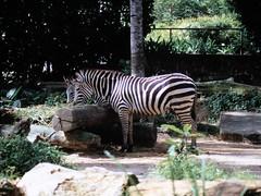 1994_Singapore_2016-07-18_Photo_182 (Matthias & Paula) Tags: singapore sentosa kuala lumpur malaysia cameron highlands zoo japanese gardens