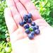 Blaubeeren (Blue Berries)