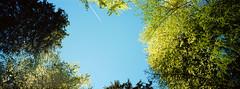 "in the woods (Steve only) Tags: hasselblad xpan 445 454 45mm f4 rangefinder kodak ektar 100 film epson gtx970 v750 landscape snap sky germany schlosneuschwanstein schlossneuschwanstein neuschwansteincastle ""new swan castle"""