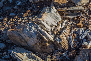 Petrified Stumps in the Bisti Badlands