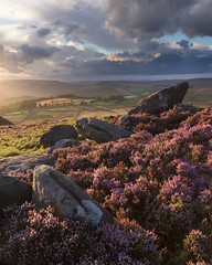 Over Owler Tor (Paul Newcombe) Tags: peakdistrict sunset peaks derbyshire england overowlertor heather august sidelight canon1635f4 uk landscape outdoor rocks gritstone canon5dsr gb britain flower inbloom paulnewcombephotography 2017 copyright