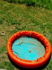 piscine trois boudins (pierre-vdm) Tags: rond round rund cercle circle kreis vert bleu orange green blue grün blau piscine schwimmbad pool poupée doll puppe barbie france boudin boudinva