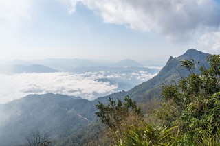 doi pha tang - thailande 11