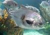 Bahamas Bonefishing Lodge - Abaco Island 25