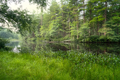 Morning Meditation (Chancy Rendezvous) Tags: spencer massachusetts pond water trees nature green grass howe state park landscape woods d500 chancyrendezvous davelawler blurgasm lawler