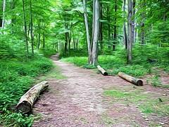 trail (01000101) Tags: panasonic lumix gx80 gx85 lumixg20mmf17 20mmf17 gimp gmic trail forest