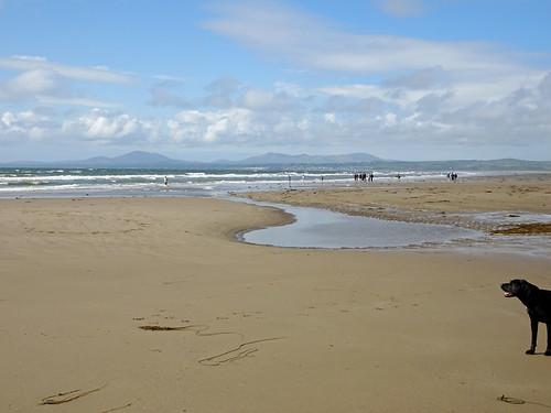 Dog on Harlech Beach -- photo 2