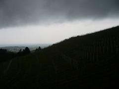Oberkirch_BottenauBusseckHofBlickRichtungNorden-WeinbergRegenwolken_16Apr2017