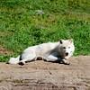 Parc Omega (Siyah Kedi Photography) Tags: quebec canada parcomega