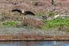 Rokkitboy-1450.jpg (Rokkitboy) Tags: woodbridgeisland birding rokkitboycreativelabs