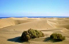 Dunas de Maspalomas. Gran Canaria (☮ Montse;-))) Tags: dunas maspalomas grancanaria canaryislands