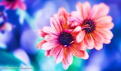 tWo (frederic.gombert) Tags: flower flowers orange red light color colors blue park garden macro sun sunlight summer spring