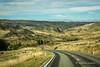 Taieri Ridge, Macrae Road, Otago (flyingkiwigirl) Tags: bridge church fence haasteagle historic hyde macraes macraesflat mine otago otagorailtrail pigskin rockpillarrange sculpture stanleyshotel taieririver taieri ridge