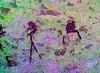 DSC07690 - NAMIBIA 2017_crgb (HerryB) Tags: 2017 southafrica afrique afrika namibia namib südwest sonyalpha77 sonyalpha99 tamron alpha sony bechen heribert heribertbechen fotos photos photography herryb ameib camping gästehaus accomodation guesthouse erongogebirge erongo rhinozeros schutzgebiet rockart rockpaintings peintres rupestres san zeichnungen felszeichnungen höhlenmalerei paintings bushmen buschmänner dstretch harman jon jonharman enhance falschfarben restauration digitalenhanced enhancement verwitterung granit granite weathering rhinosanctuary phillipscave phillipps halbhöhle überhang höhle abbébreuil