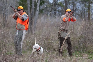 Private Alabama Quail Hunting - Davis Quail 15