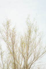 Fine leaves (Navansphotography.com) Tags: pastelcolours minimalistic fineart tree trees travel subtlety colors