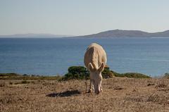 vacanze sarde_-70 (Trittonando) Tags: asinara sardegna sardinha asinello bianco carcere