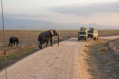 DSC_0141 (stacyjohnmack) Tags: africa kenya amboseli amboselinationalpark amboselli baby elephant family safari
