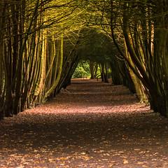 Beautiful Woodland walk 🌳🍃 (EYeardley) Tags: woodlandwalk woodland apleywoods telford shropshire uk england englishcountryside rural countrywalk countryside trees tree archway nature naturetrail natureshot beautiful nikond3300 nikon sigma light shadows sunlight