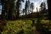 One of my special places (speedcenter2001) Tags: sierranevada sierra sierraphile highsierra anseladamswilderness california mountains backpacking backcountry outdoor nature wilderness hiking fern fishvalley shadows warm hiker nikon20mmf35ai manualfocus