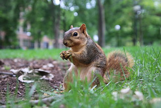 68/365/3355 (August 18, 2017) - Squirrels in Ann Arbor at the University of Michigan (August 18th, 2017)