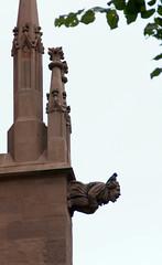 Göttingen, Jakobikirchhof, Kirche St. Jacobi (St. Jacob's Church,  gargoyle) (HEN-Magonza) Tags: göttingen jacobikirchhof kirchestjacobi stjacobschurch niedersachsen lowersaxony deutschland germany wasserspeier gargoyle