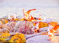 Ready to Fly (Francesco Impellizzeri) Tags: brighton england uk birds canon landscape rocks seagulls