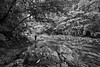 River trek (315Edith) Tags: canon 70d efs1022mm bw monochrome grayscale forest river
