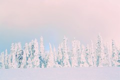 Olympic Ethereal (jordans-photos) Tags: landscape colorful olympicmountains olympicnationalpark winterlandscape minimalistic minimalism pastel pastelcolors snow forest
