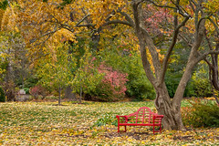 Autumn and red bench(Explored 9-18-17) (David DeCamp) Tags: autumn leaf tree nature park bench outdoors season forest yellow october landscape scenic plant footpath seat red