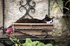 IMGP0782 (fLobOOk) Tags: cordes sur ciel cordessurciel aveyron tarn village médiéval histoire chien chat france europe garonne tarnetgaronne