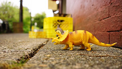 Triceratops! (Eric Flexyourhead) Tags: vancouver canada britishcolumbia bc eastvancouver eastvan commercialdrive thedrive charlesstreet city urban detail fragment sidewalk toy plastic dinosaur triceratops yellow shallowdepthoffield bokeh 169 sonyalphaa7 zeisssonnartfe35mmf28za zeiss 35mmf28